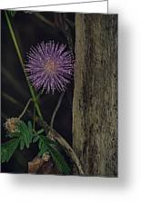 Thailand  Purple Wild Flowers Greeting Card