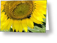 Thank God For Sunflowers Greeting Card