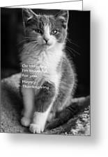 Thanksgiving Kitty Bw Greeting Card