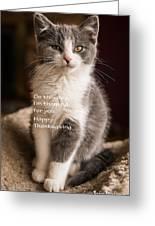 Thanksgiving Kitty Greeting Card