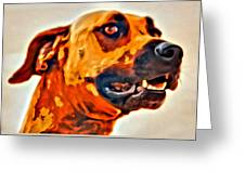 That Doggone Face Greeting Card