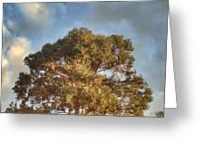That Peaceful Tree Again Greeting Card