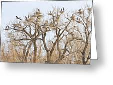 Thats A Lot Of Heron Greeting Card