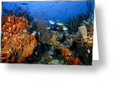 The Active Reef Greeting Card