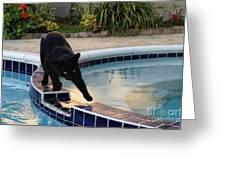 The Adventurous Feline Greeting Card