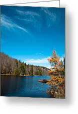 The Alpine Larch Tree On Bald Mountain Pond Greeting Card