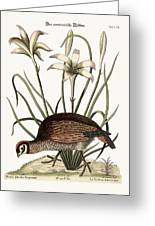 The American Partridge Greeting Card