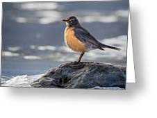 The American Robin Square Greeting Card
