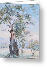 The Ancient Gum Tree Greeting Card