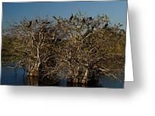 The Anhinga Trees Greeting Card