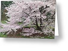 The Arboretum Cherry Blossoms Greeting Card