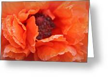 The Art Of Poppy Greeting Card
