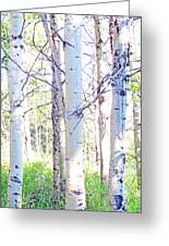 The Aspens #4 Greeting Card