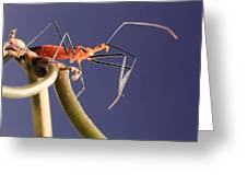 Garden Assassin Bug Greeting Card