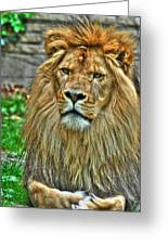The Attentive Lazy Boy At The Buffalo Zoo Greeting Card
