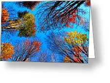 The Autumn Leaves At Potato Creek Greeting Card