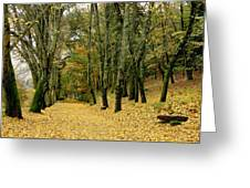 The Autumn Path Greeting Card