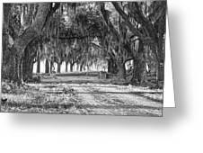 The Avenue Of Oaks Greeting Card