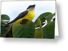 The Banaquit Of Costa Rica Greeting Card