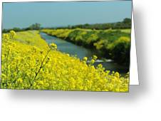 The Banks Of Yellow Greeting Card
