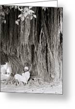 The Banyan Tree Greeting Card