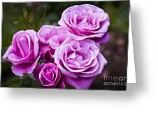 The Barbara Streisand Rose Greeting Card