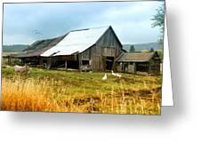 The Barnyard Bunch Greeting Card