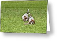 The Bassets Greeting Card