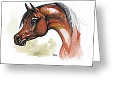 The Bay Arabian Horse 15 Greeting Card