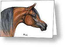 The Bay Arabian Horse 18 Greeting Card
