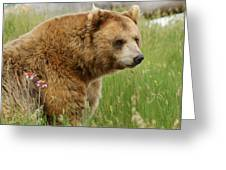 The Bear Dry Brushed Greeting Card