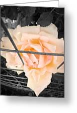 The Beautiful Rose Greeting Card