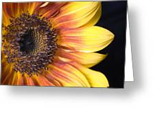 The Beautiful Sunflower Greeting Card