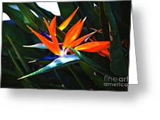 The Beauty Of A Bird Of Paradise Greeting Card