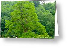 The Beauty Of A Tree Greeting Card