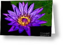 The Beauty Of A Water Liliy Greeting Card