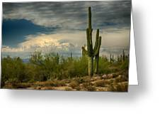The Beauty Of The Desert Southwest  Greeting Card