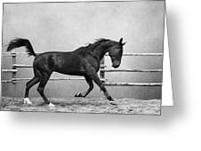 The Beauty Of The Horse Greeting Card