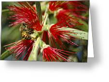 The Bee And Bottlebrush Greeting Card