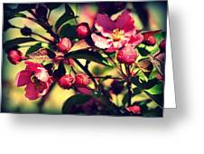 The Bee And The Blossom Greeting Card