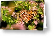 The Bee And The Butterfly Greeting Card