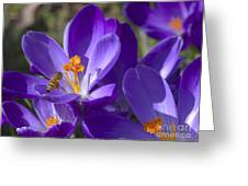 The Bee And The Crocus Greeting Card