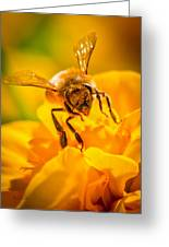 The Bee Gets Its Pollen Greeting Card