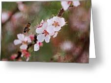 The Bee In The Cherry Tree Greeting Card