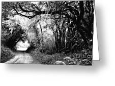 The Bend In The Road Bw Greeting Card