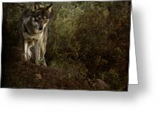 The Big And Not Too Bad Wolf Greeting Card