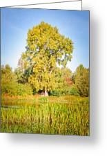 The Big Autumn Poplar Greeting Card