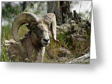 The Big Horn Greeting Card