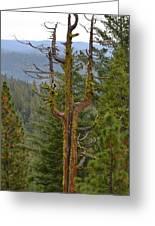 The Big Tree Fork Greeting Card
