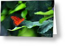 The Bigger Picture Greeting Card